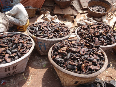 337_Mopti  Commodities to be Sold  Dried Fishes  Part 3