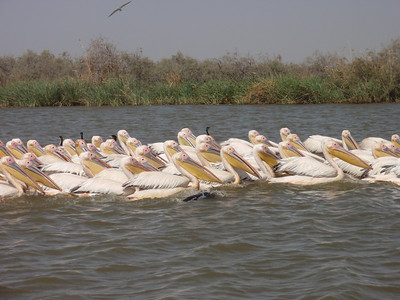 119_Djoudj National Bird Park  World's 3rd  Largest Bird Sanctuary