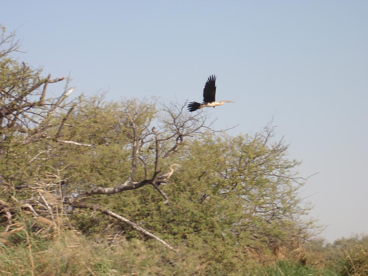 126_Djoudj National Bird Park  Bird Watching