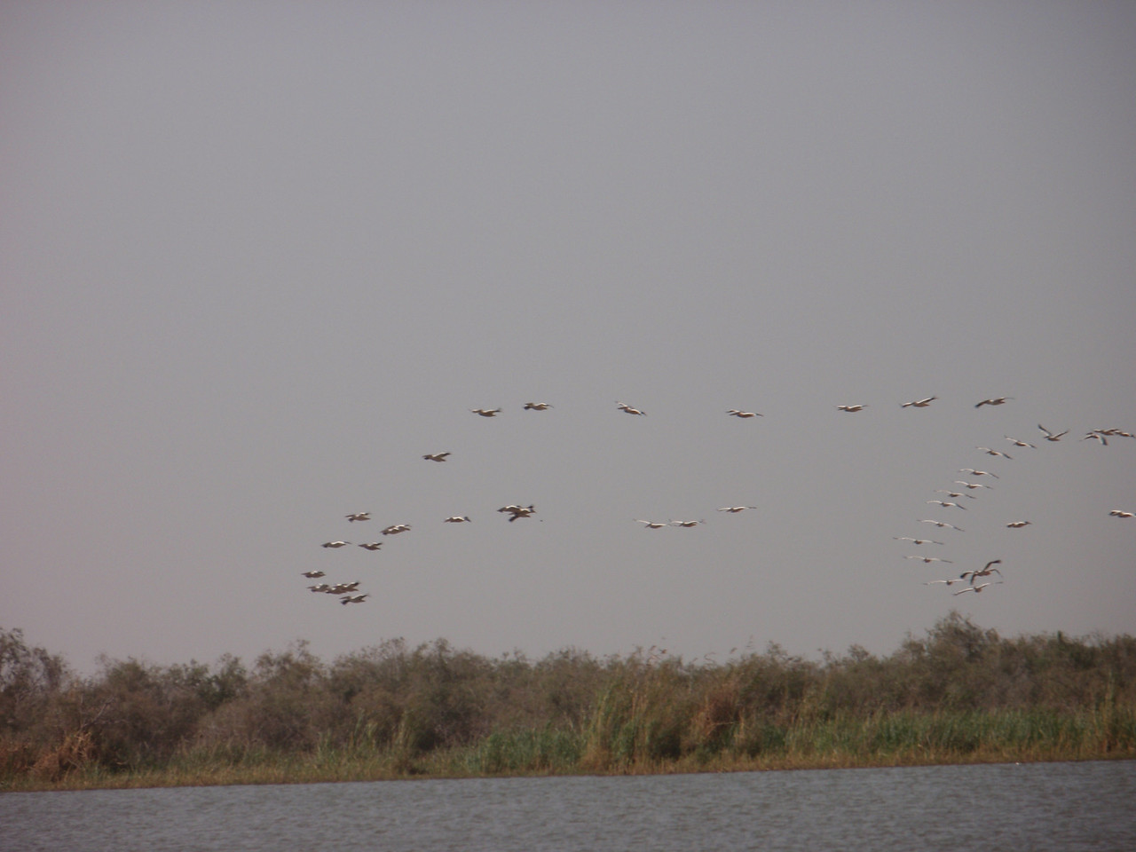 142_Djoudj National Bird Park  350 Species  Bird Watching