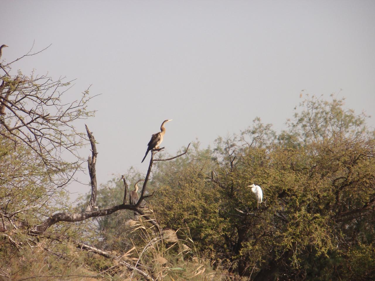 125_Djoudj National Bird Park  350 Species  Bird Watching