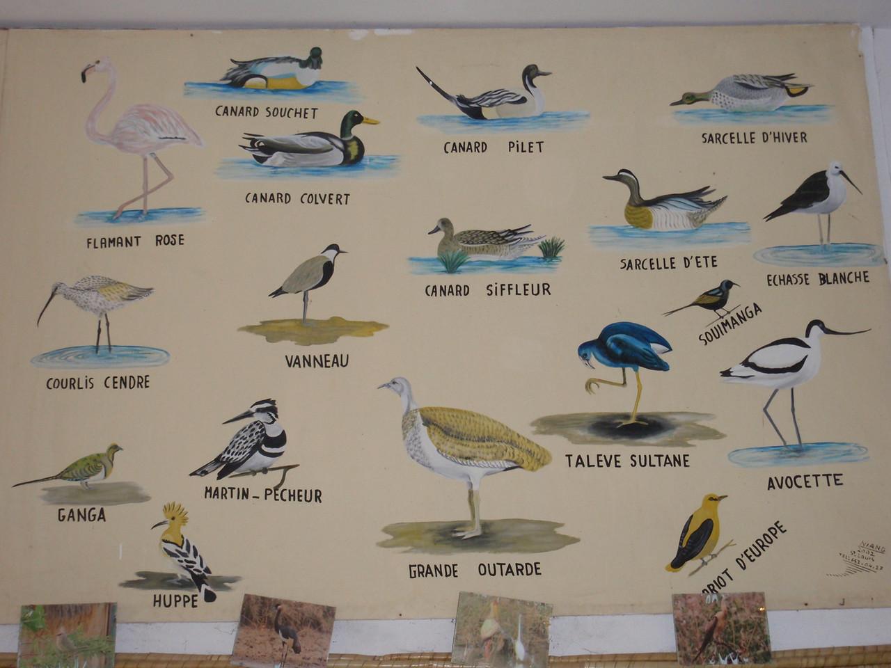 118_Djoudj National Bird Park  UNESCO World Biosphere Reserve