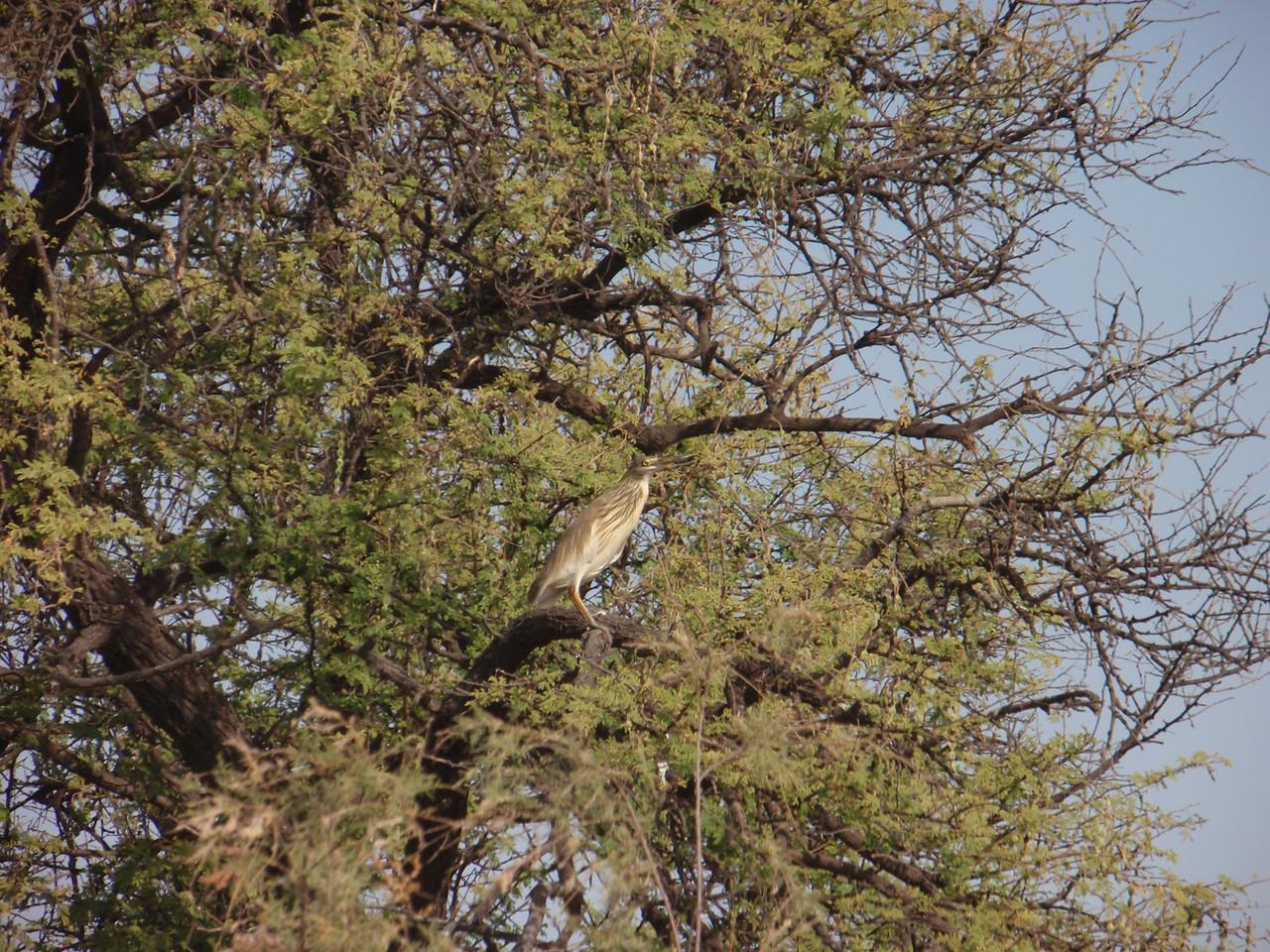 128_Djoudj National Bird Park  Bird Watching