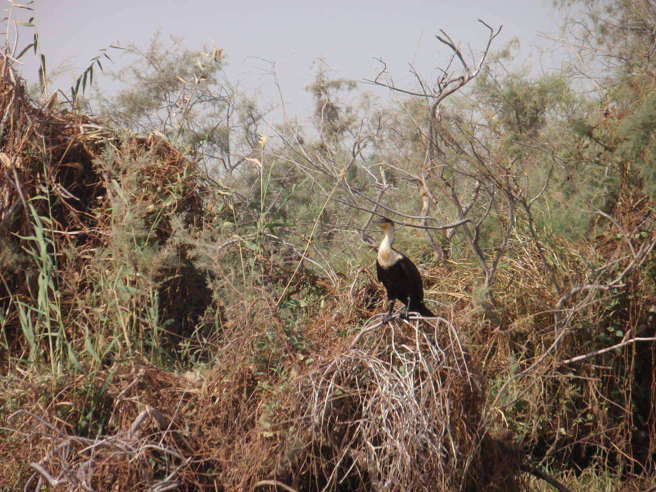 151_Djoudj National Bird Park  Bird Watching