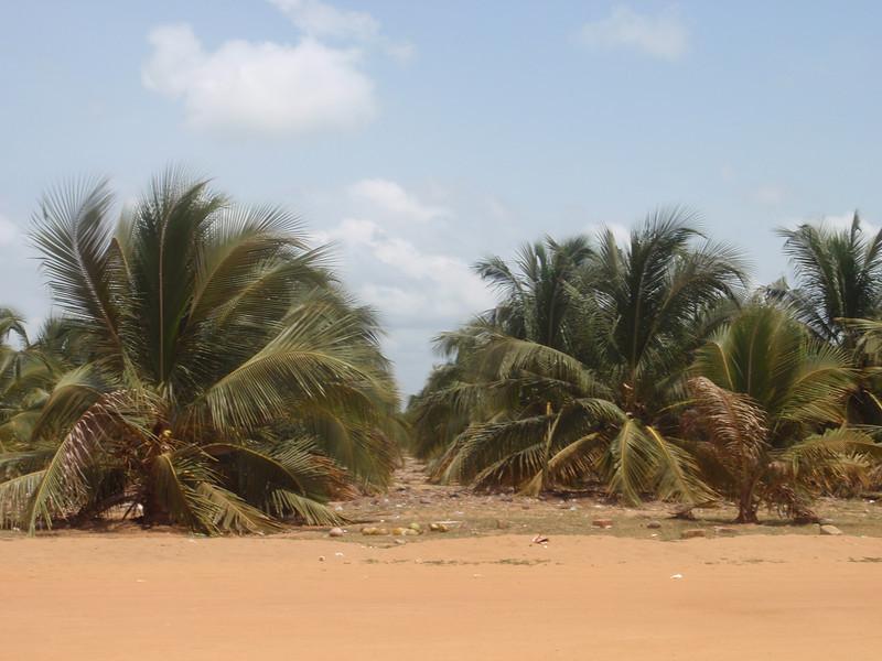 015_Ouidah  Facing the Golfe de Guinee  Daily Life