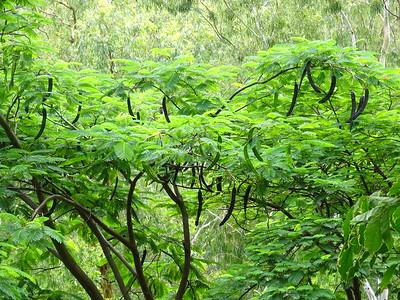 100_Santiago Island  Botanical Garden  Grandvaux Barbosa