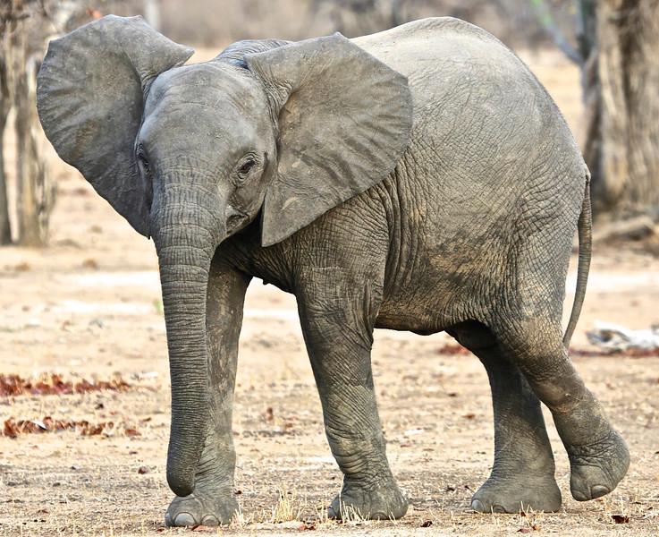 013_Liwonde National Park  Mvuu Camp  Central African Wilderness Safaris