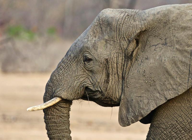 014_Liwonde National Park  Mvuu Camp  Central African Wilderness Safaris