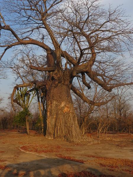 018_Liwonde National Park  Mvuu Camp  Central African Wilderness Safaris