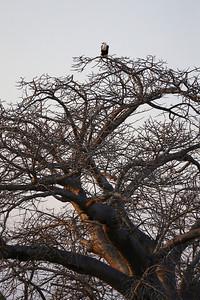 023_Liwonde National Park  Mvuu Camp  Central African Wilderness Safaris