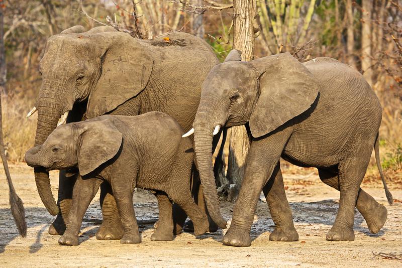 016_Liwonde National Park  Mvuu Camp  Central African Wilderness Safaris