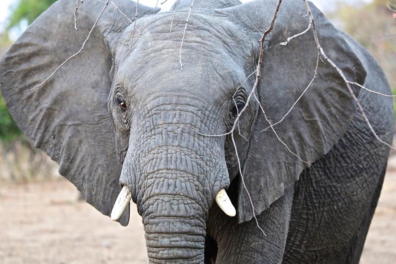 027_Liwonde National Park  Mvuu Camp  Central African Wilderness Safaris