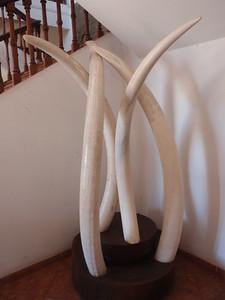 035_Maputo  Museum of National History  1903