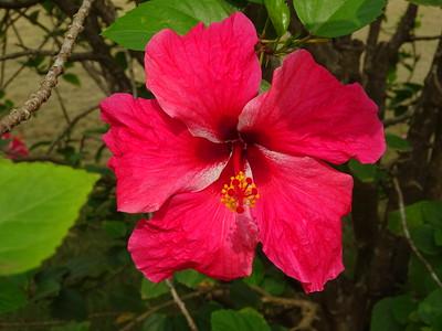 055_Sao Tome Island  My Hotel  Omali Lodge Boutique Hotel