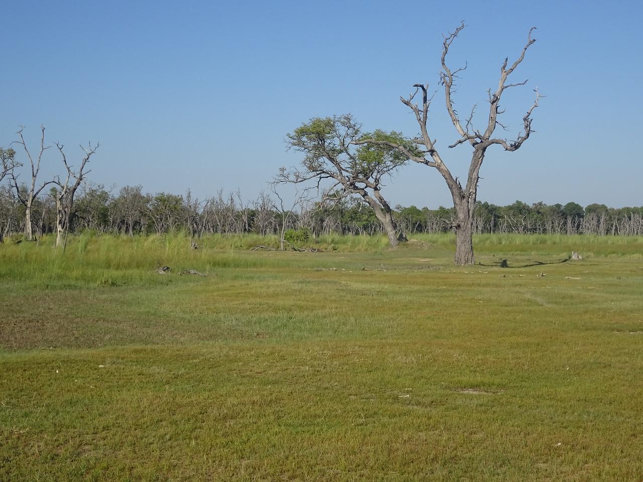 052_Okavango Delta, Moremi Game Reserve  4WD Safari