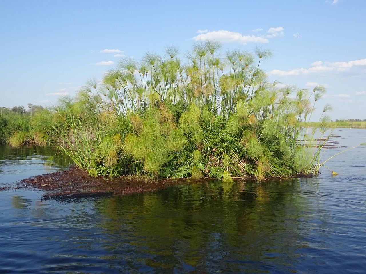 108_Okavango Delta, Moremi Game Reserve  Waterways Safari  Floating Vegetation  Papyrus  Paper, floor mats, canoe