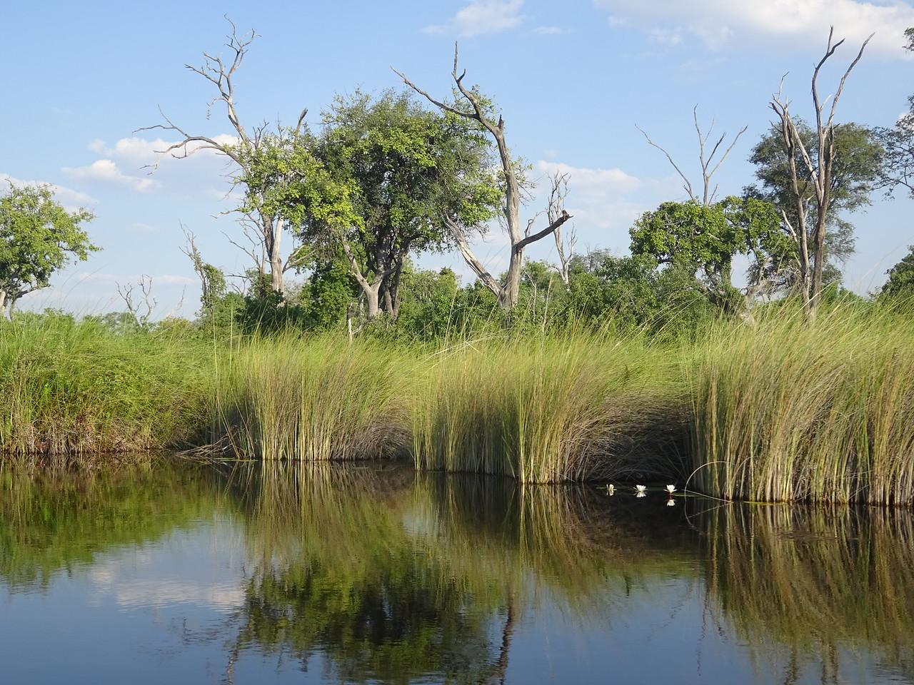 106_Okavango Delta, Moremi Game Reserve  Waterways Safari