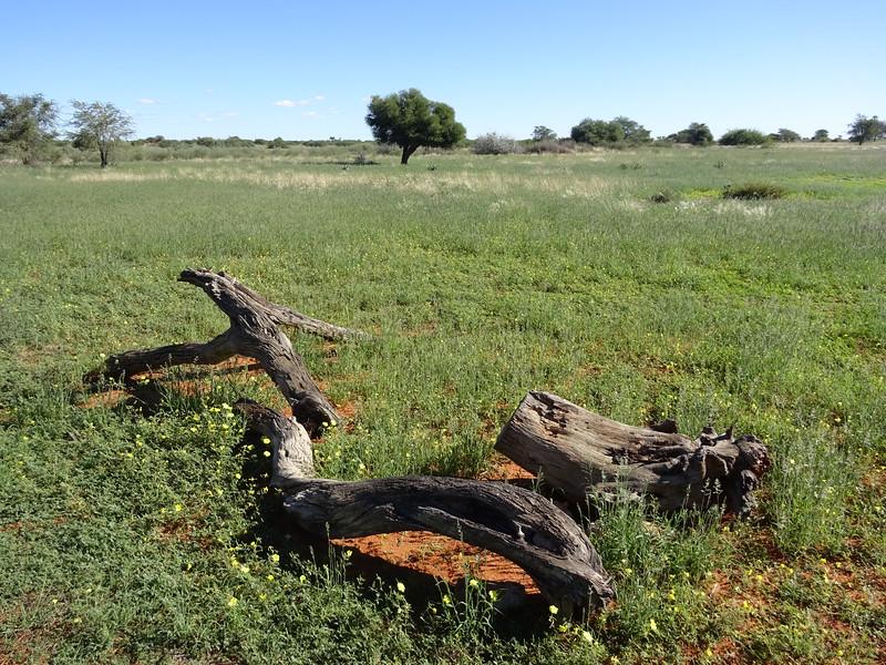 027_Gondwana Kalahari Park