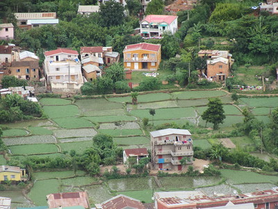 038_Antananarivo  Rice paddies are tended right up to the edge of the city