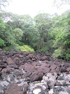 191_Ankarana NP  Vers la Grotte des Chauves Souris  Roches volcaniques