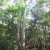 166_May have the highest density of primates of any forest in the world