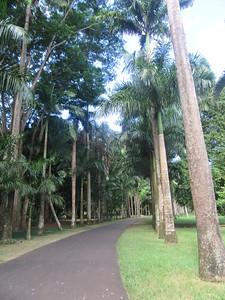 100_Pamplemousses Botanical Gardens  Royal Palm Alley
