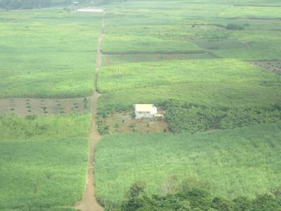 010_Terre fertile couverte de cannes à sucre  89% des terres arables et 36% de la superficie de l'île