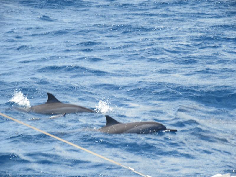 033_The West Coast  Sail the Dolphin Coast
