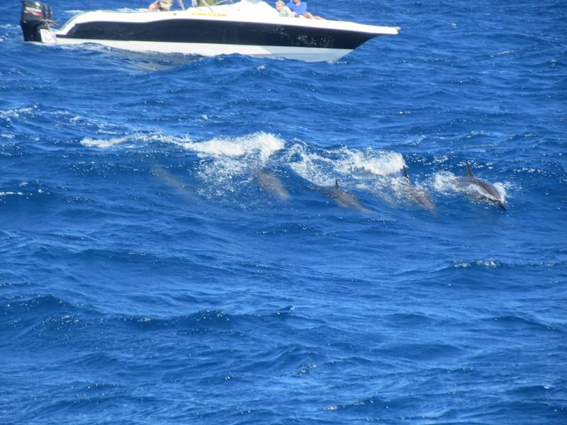 035_The West Coast  Sail the Dolphin Coast