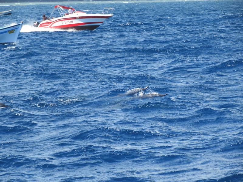 031_The West Coast  Sail the Dolphin Coast