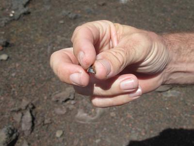 048_Plaine des Sables  Au fond du volcan, Olobyte (une forme de crystal)  Expulsée avec spories