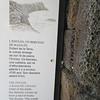 064_Le Piton de la Fournaise  L'Enclos du Volcan  Altitude 2215m