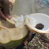 395_Coconut Tree (7 of 7)  Coconut  The coconut flesh