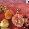 266_Golden Mango  Dorian (the stinky fruit), smells bad, but taste like heaven  Bungo fruit, very sour