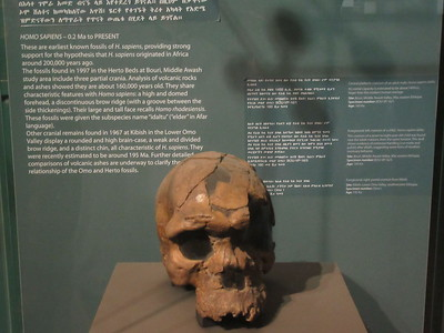 476_Addis Ababa  National Museum of Ethiopia  Human Evolution  Homo Sapiens  200,000 years ago to Present