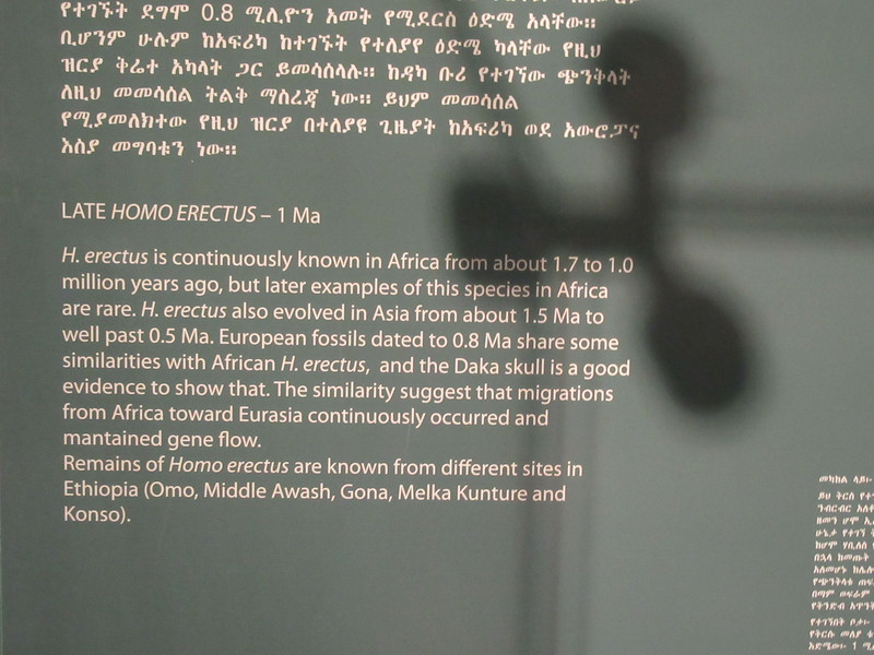 474_Addis Ababa  National Museum of Ethiopia  Human Evolution  Late Homo Erectus  1 Ma (one million year ago)