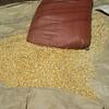 571_Arba Minch  Market  Maze (Corn)