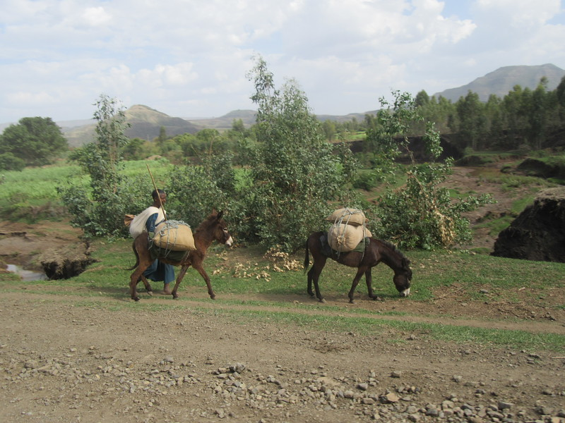 417_4 million donkeys  Farmer owns 1 or 2  Ethiopian don't eat donkey  1 adult donkey cost 2,000 BIRR ($80 US)