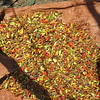 590_Arba Minch  Market  Chili Pepper