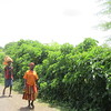 662_Konso Cultural Landscape  Double skirt  Long upper part means Married  UNESCO World Heritage Site