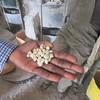421_Tis Abay Village  Cereal (Millet, Sorghum, Teff) transformation into flour