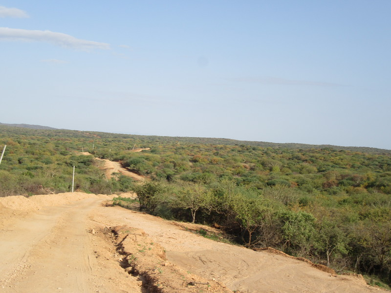 734_Dirt road in the Savana