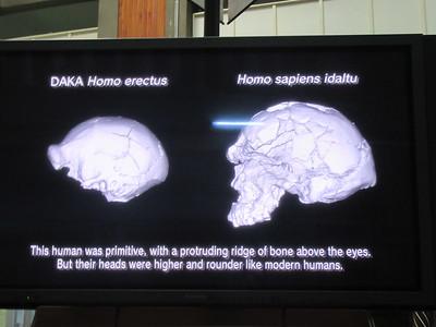 484_Addis Ababa  National Museum of Ethiopia  Human Evolution  Homo Sapiens Idaltu