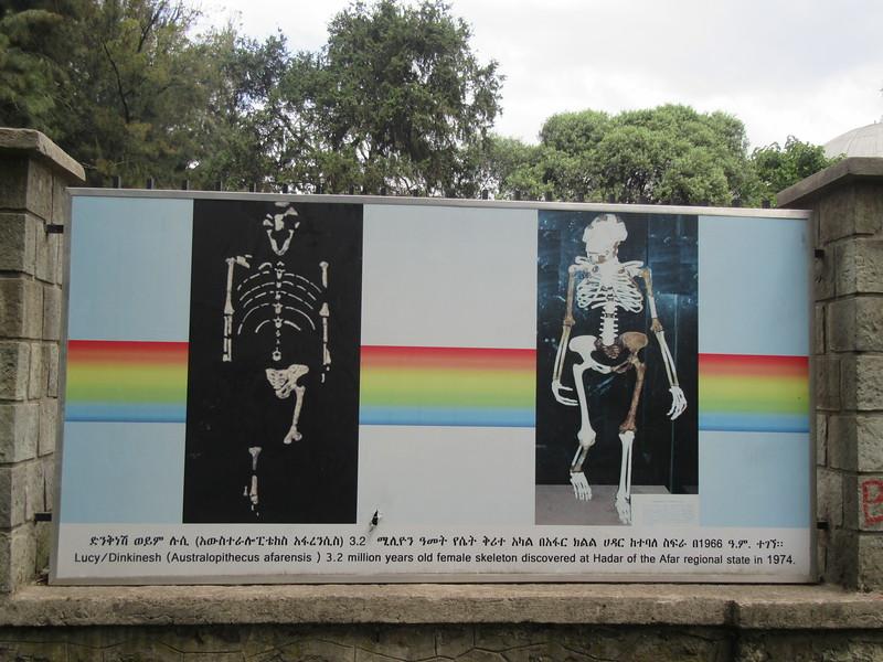002_Ethiopia  3,5 million-year-old skeleton of Autralopithocus Afarencis Lucy  Origin to Humankind