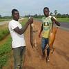 127_A la sortie de Yamoussoukro  Vente de petits gibiers (Biche et Cob)