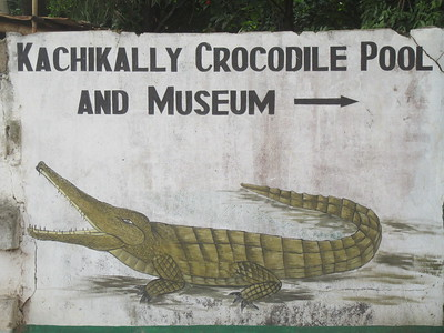 016_Banjul  Kachically Crocodile Poll and Museum