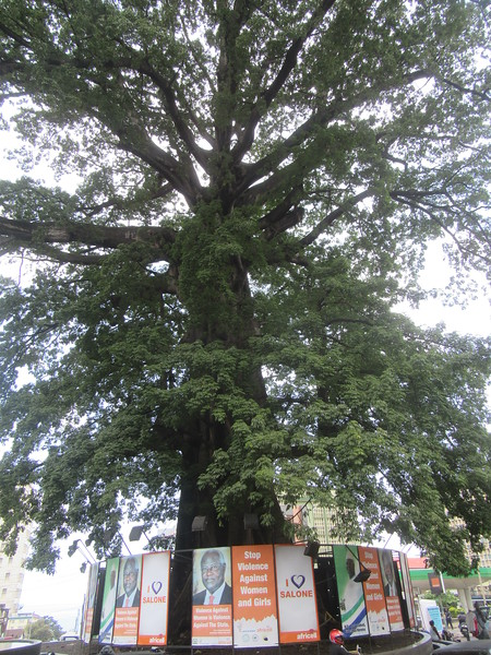 030_Freetown  The Cotton Tree  Holds Spirits and Blessings  1 of 2
