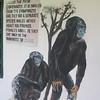 136_Tacugama Chimp Sanctuary