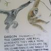 138_Tacugama Chimp Sanctuary