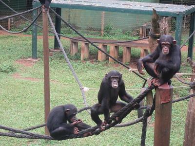 139_Tacugama Chimp Sanctuary  Group 3  8 to 12 years-old
